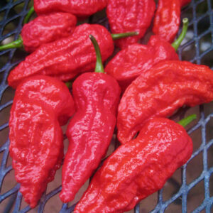PEPPER EXTREME HOT